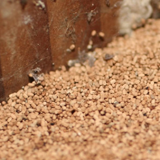 drywood termite pellets