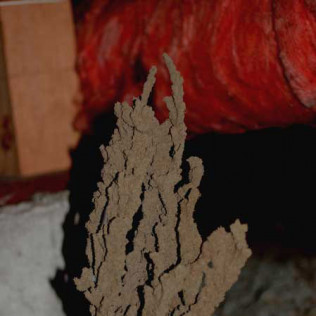 termite tubes in a sub area